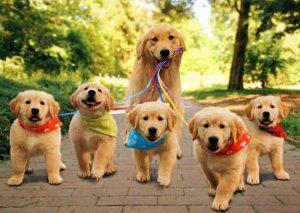 puppyfamily